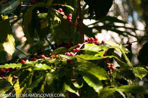 Vallarta Botanical Gardens -5