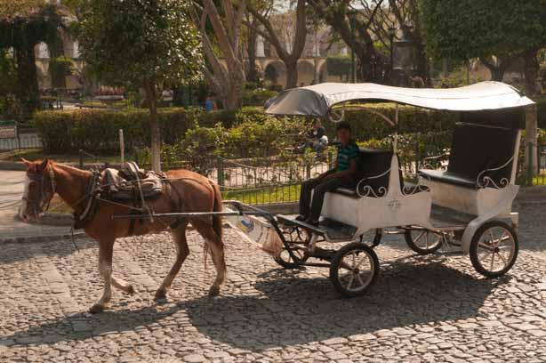 You can take a horse and buggy around the city of Antigua