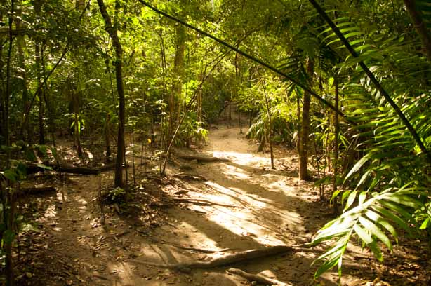 You can walk for hours through the jungle trails Guatemala Mayan Ruins