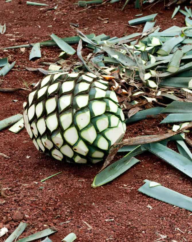 The 'pineapple'