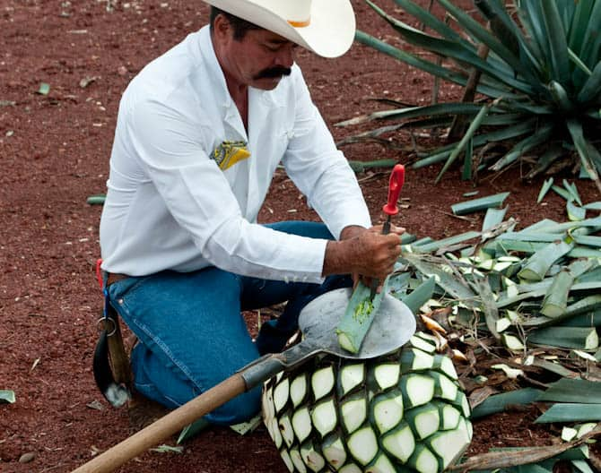 Tequila Mexico