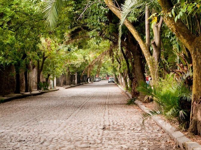 Tree-lined cobblestone streets of Coyoacan mexico city