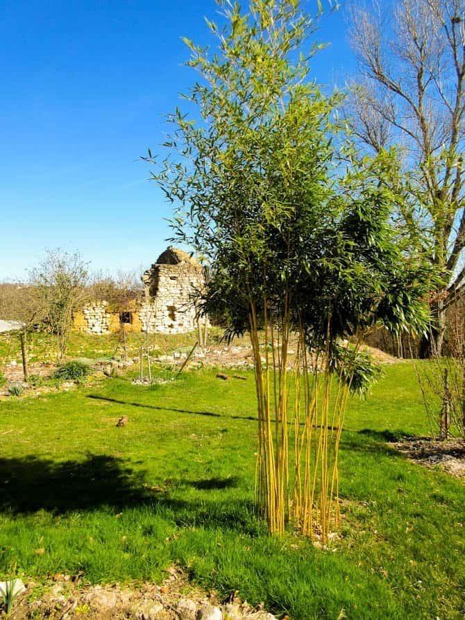 Bamboo & stone ruin