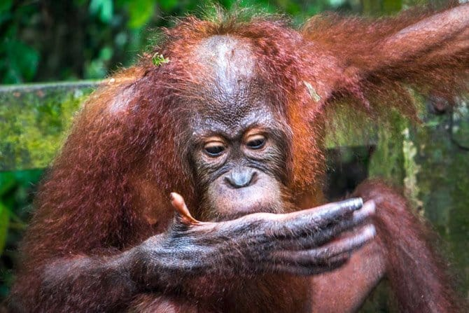 Where to go in southeast Asia, Borneo, Nomad is Beautiful