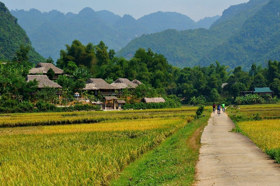Where to go in Southeast Asia The rice fields in Vietnam