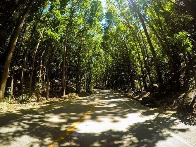 Bohol Mahogany Forest