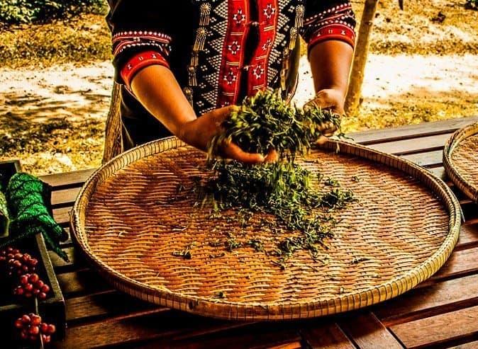 Tea Plantation Thailand