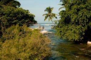 water and jungle at Mismaloya Puerto Vallarta