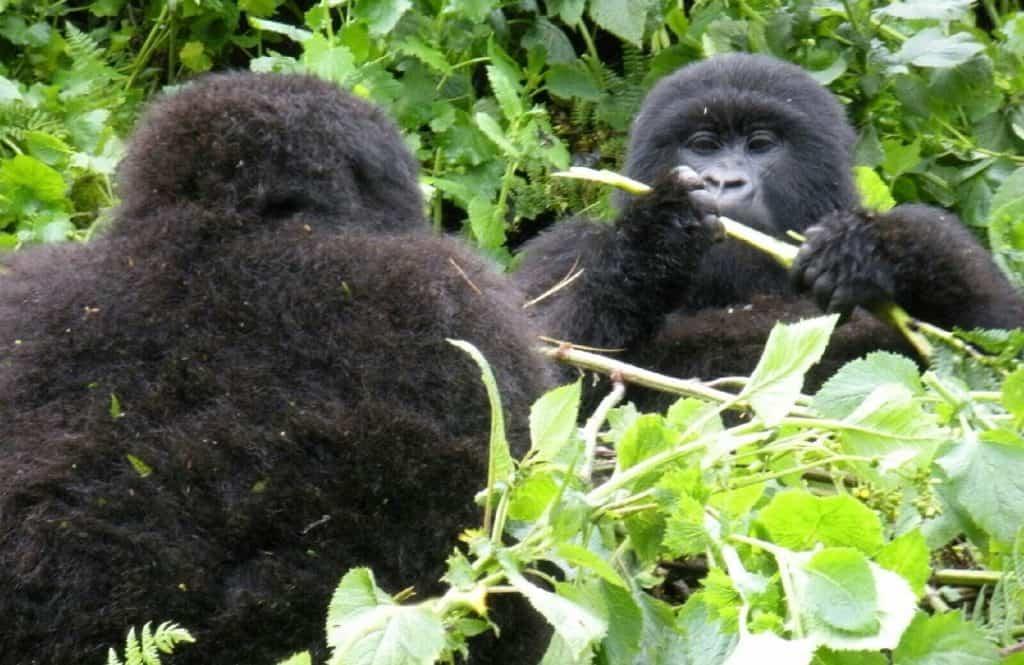 Rwanda Great Hikes in Africa