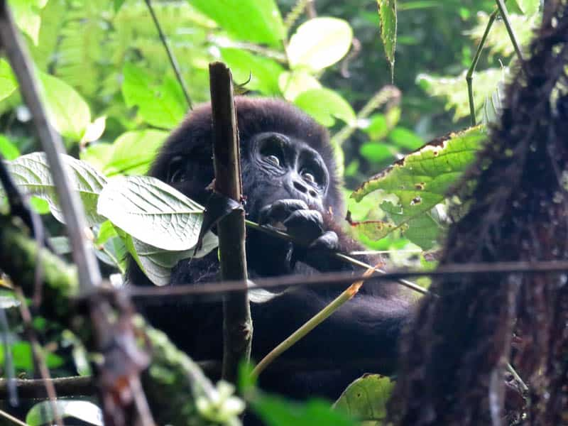 Bwindi Uganda Best hikes in Africa