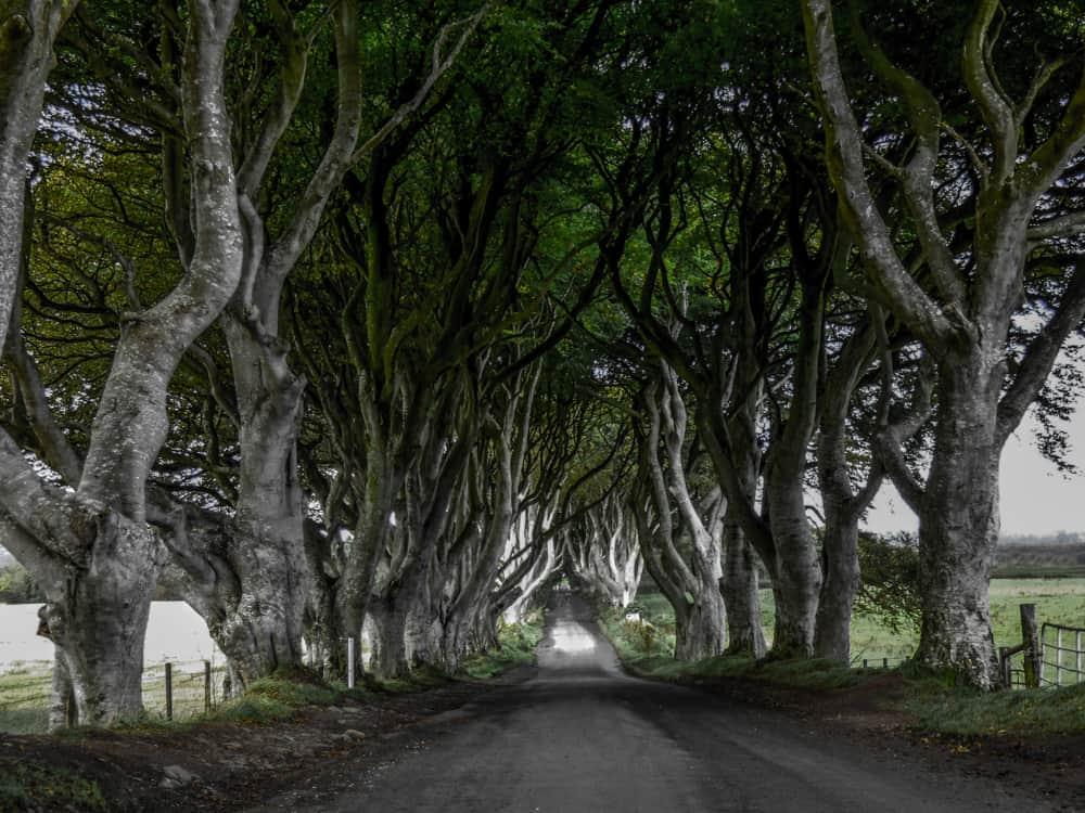 Game of Thrones Dark Hedges Northern Ireland