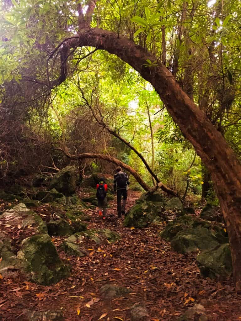 View of two people walking away from the camera into a lovely enchanted looking forest in Howth Dublin