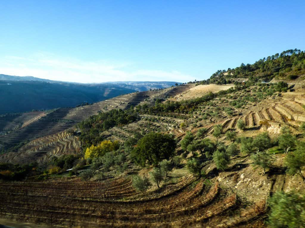 Vineyards and olive groves in Portugal