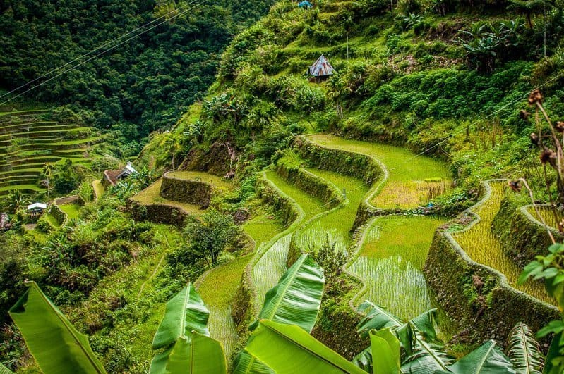 View looking down of the bright green terraced fields of the Banaue Rice Terraces