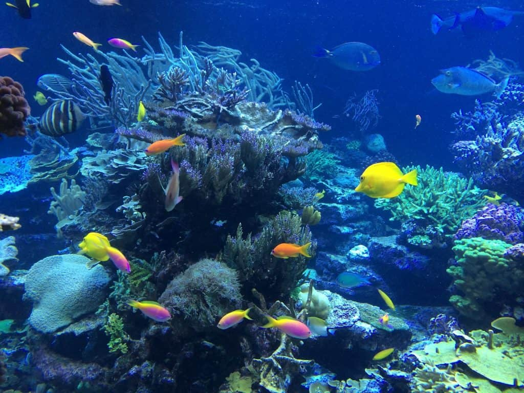 Undersea shot of tropical brightly colored fish and coral