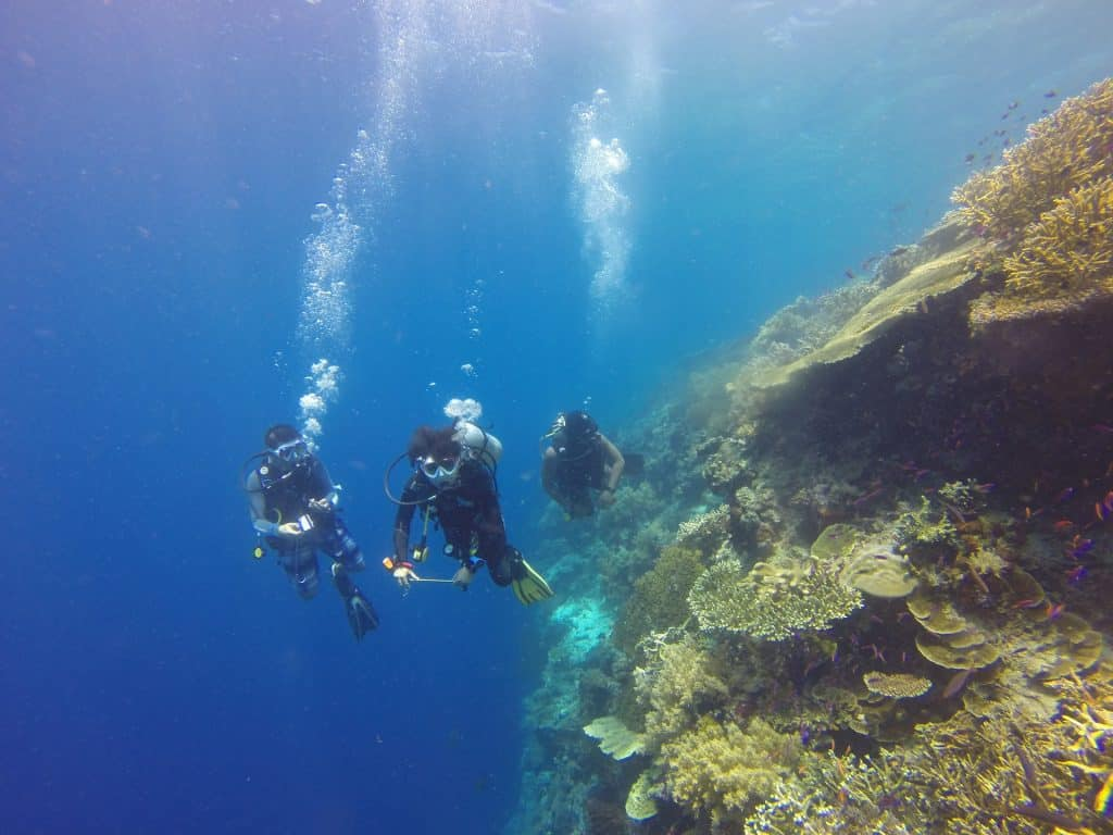 Three suba divers at a coral reef