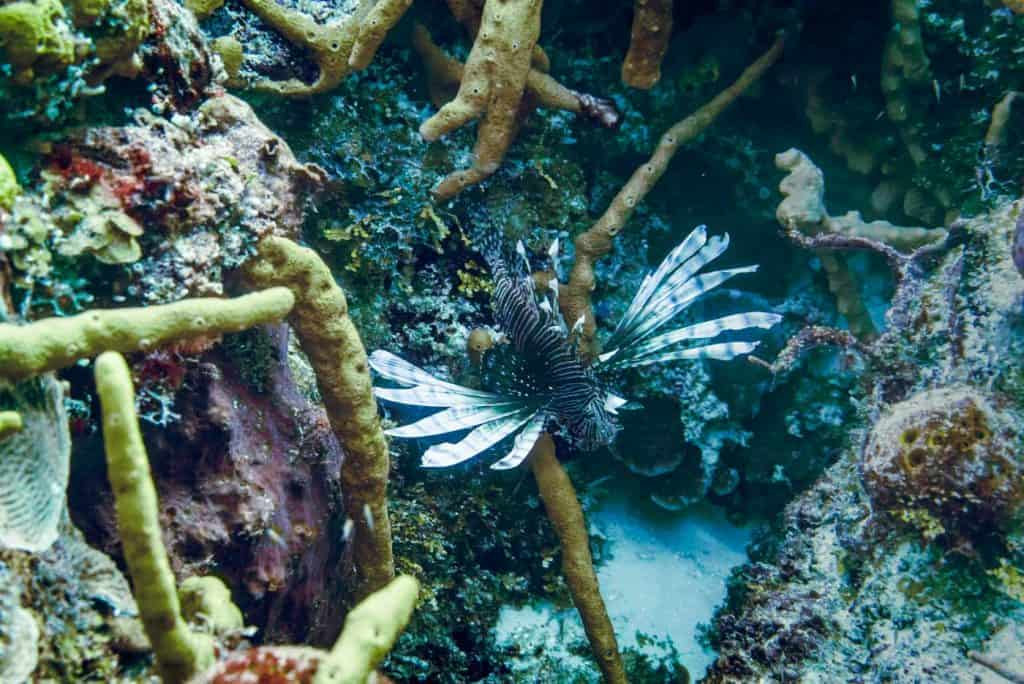 Reasons to visit Mexico Cozumel Diving