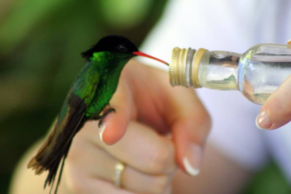 Rocklands Bird Sanctuary: Day trips from Montego Bay