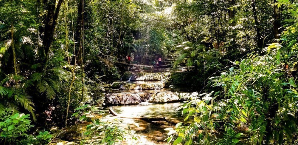 Jungle trek near Palenque ruins