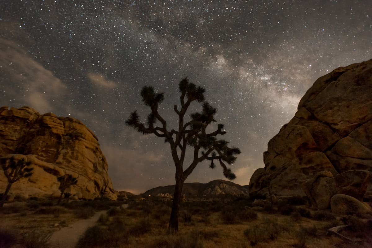 A silhouette of a Joshua Tree at night in