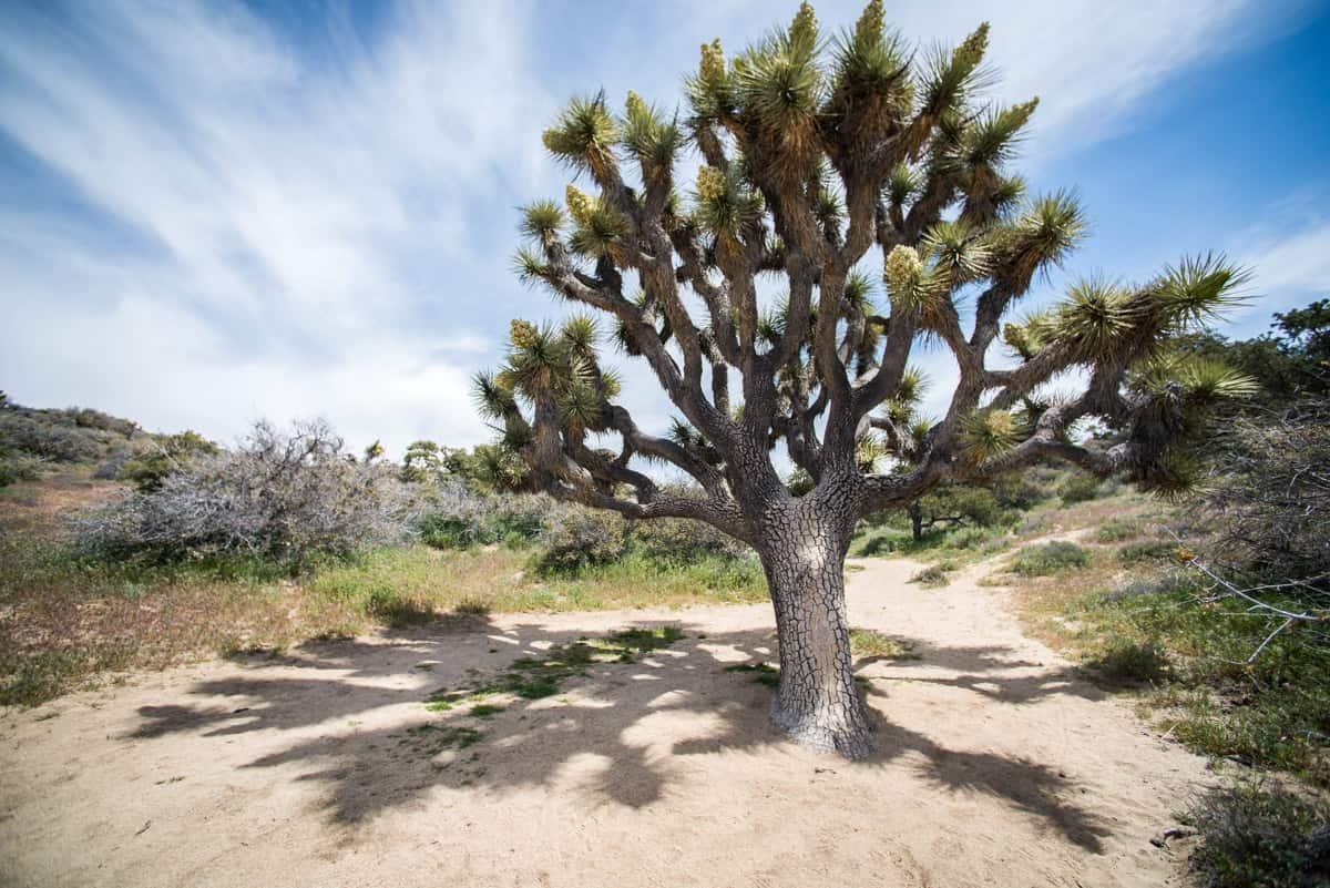 Joshua Tree Hikes (+ Other Things to do in Joshua Tree National Park) -