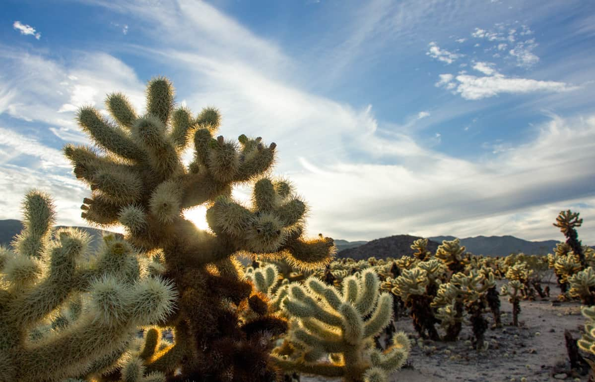 Furry looking cactus with blue sky background