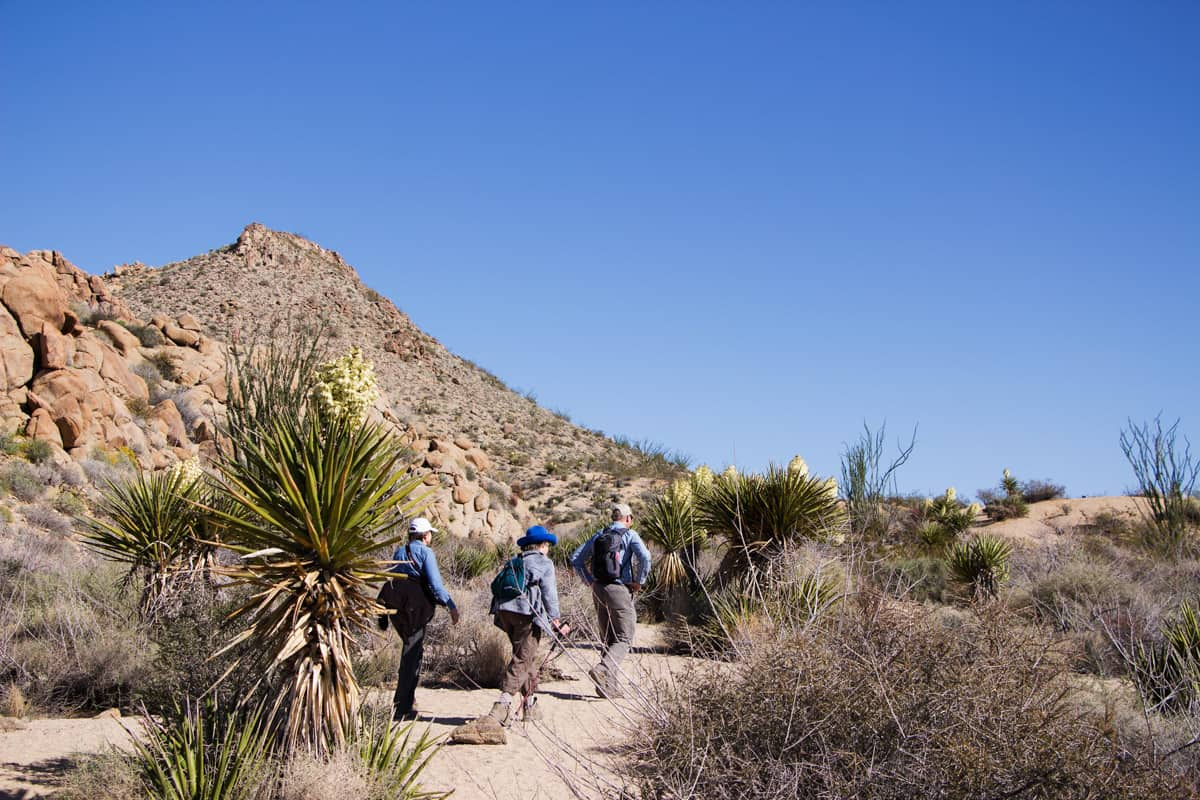 Hikers on a desert trail with cacti and palm trees