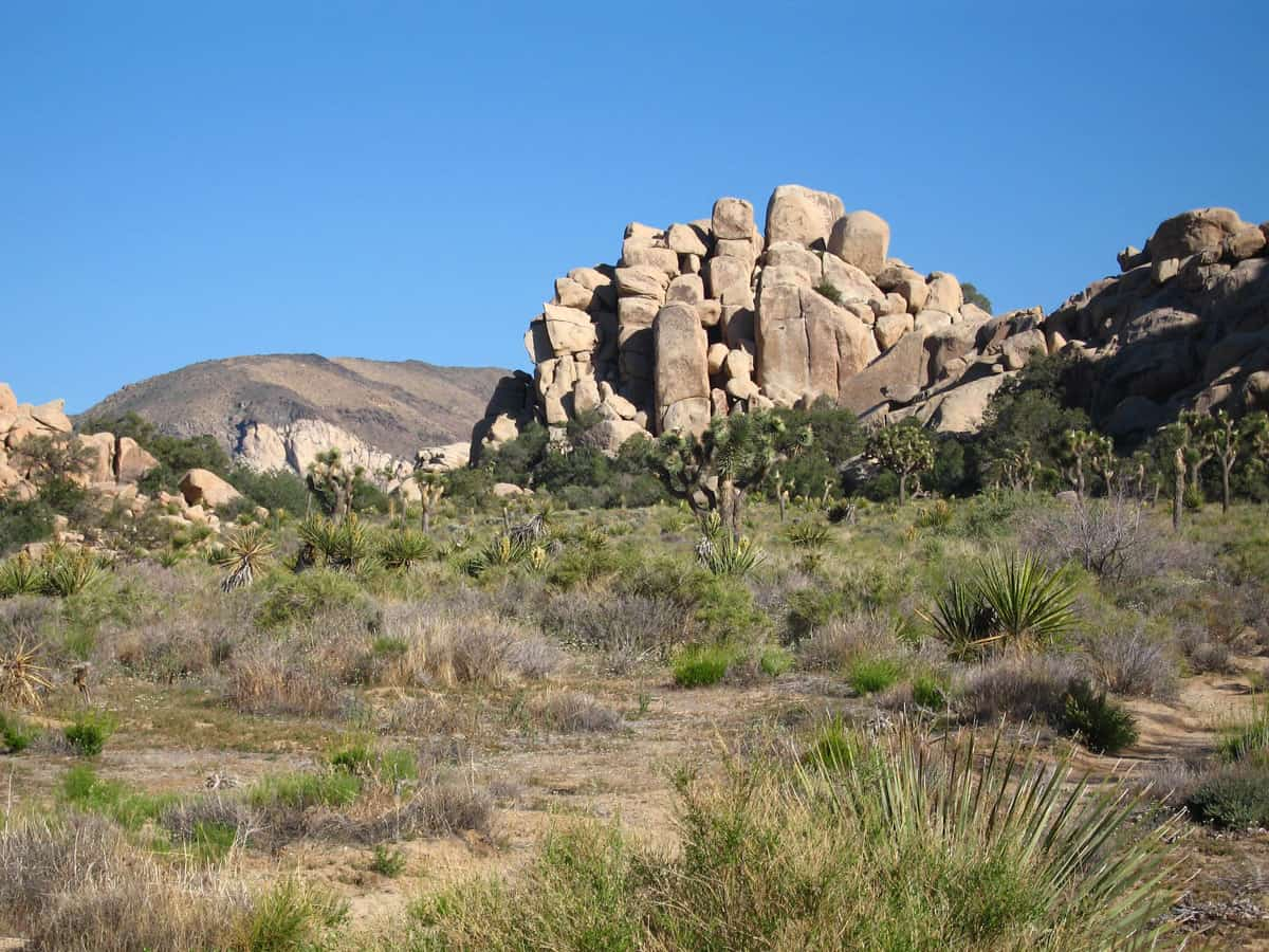 Boulders in the desert at Joshua Tree Park