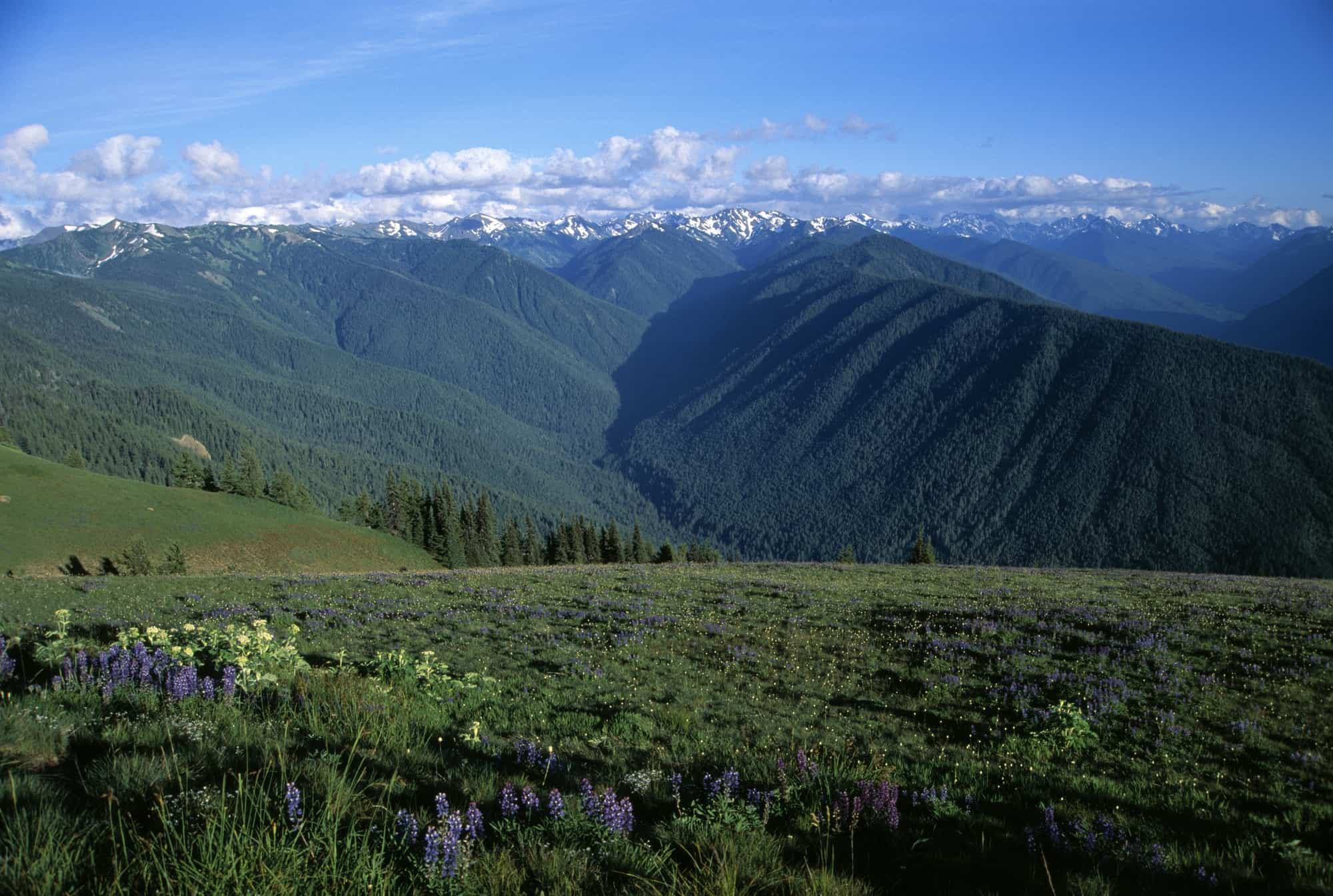 View of the Olympic Mountains in Olympic National Park, WA
