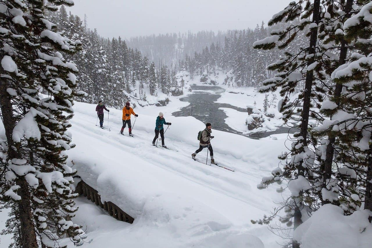 Cross country skiiers surrounded by evergreens and snow