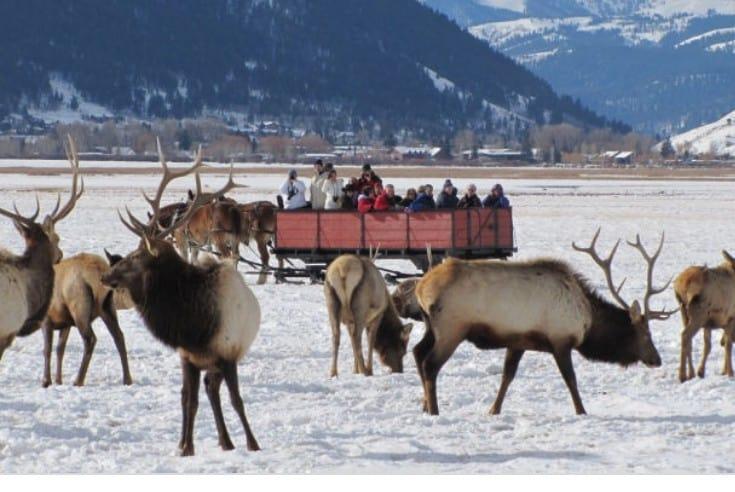 Jackson National Elk Refuge sleigh ride